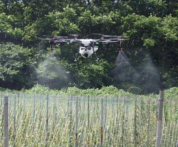 ナガイモにおけるマルチローターによる薬剤散布試験