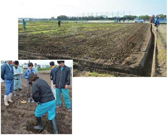 青ねぎ産地の湿害を排水対策技術で改善
