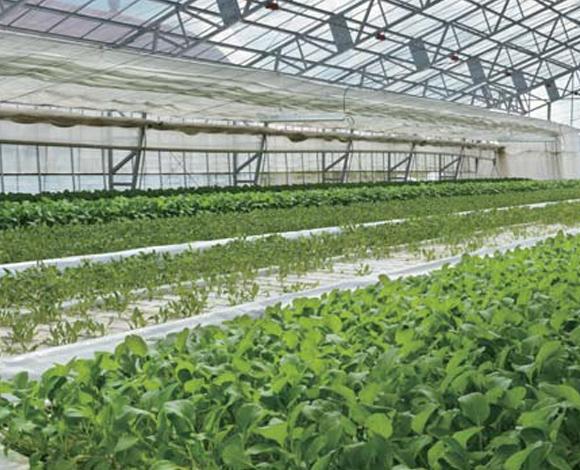 底面の全部がコンクリート等で覆われた 農業用施設の農地法上の取扱いについて