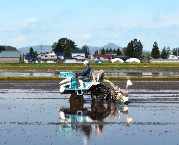 鉄コーティング直播で農地を守る!栽培技術を向上し、省力化した稲作体系を次世代につなぎたい