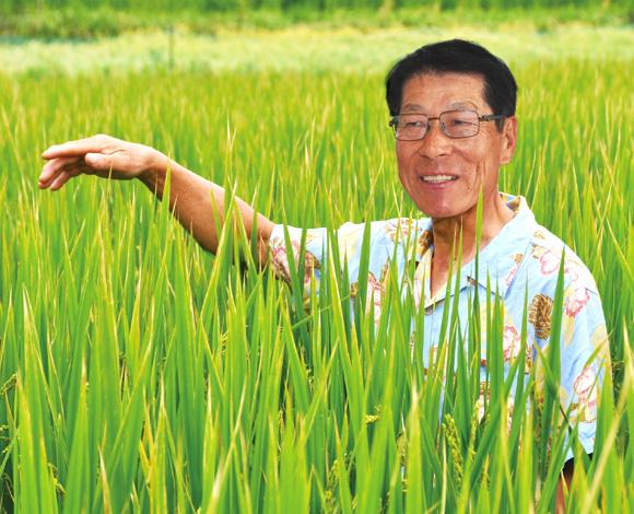 専用品種導入と鉄コーティング直播栽培で挑むWCS用稲