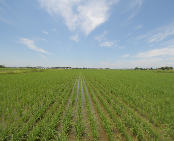 乾田直播に挑む!高速汎用施肥播種機で複数粒の高速点播を実現