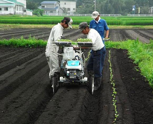 ミニカリフラワー栽培における機械化・施肥低減技術の実証(秋田県・平成21年度)