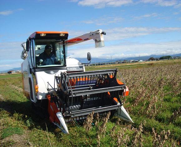 小畝立て深層施肥播種技術および雑草防除技術の導入による大豆の収量・品質の向上(山形県・平成25年度)
