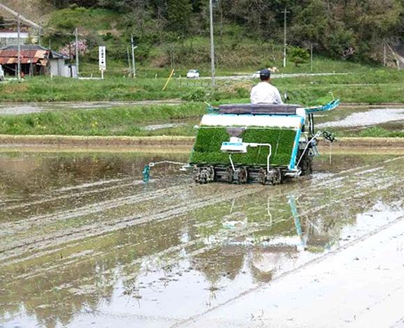 水稲移植栽培における密播疎植栽培技術の実証(広島県・平成25年度)