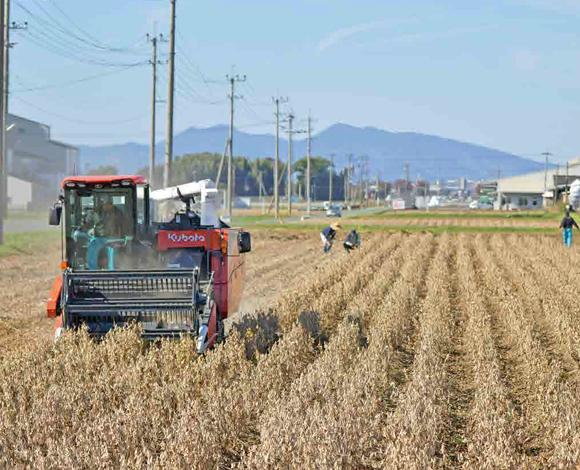 【クボタ ソリューションレポート No.26】目標に届く収量を確保! 普通型コンバインWRH1200でロスの少ない大豆の収穫作業!