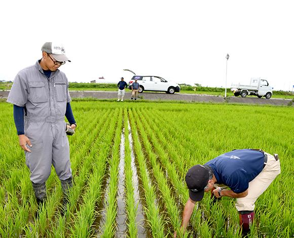 【クボタ ソリューションレポート No.38】富山県で乾直の生育調査を実施 3種類の播種機の比較で経営体に適応した乾直体系を選ぶ