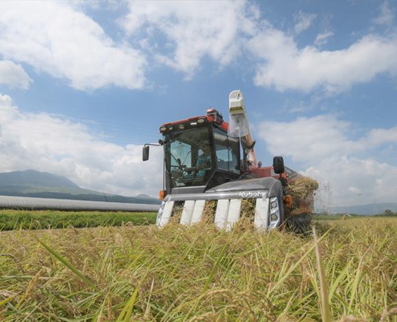 熊本県で慣行栽培と遜色ない収量を上げた密播栽培 来年度は栽培面積を拡大し本格導入へ!