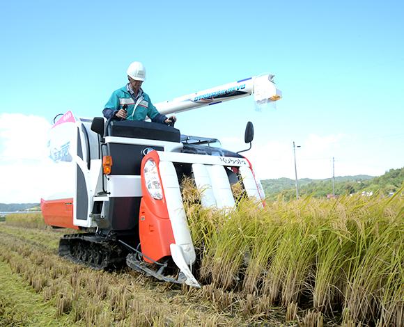 慣行移植栽培を上回る収量確保!「鉄コーティング直播」で確かな手応え